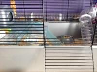 Hamster + Cage