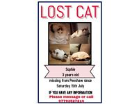 Missing Lost cat ! Cash reward HELP FIND