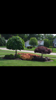 Landscaping Services at Very Affordable Rates