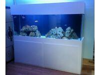 CUSTOM LARGE 600L 2M LONG FISH TANK AQUARIUM SUMP LIGHT UNIT WOODEN STAND VERY VERY HEAVY !!!!!!!!!