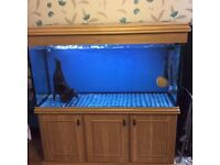 5 ft fish tank for sale