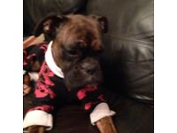 Boxer dog stole from Gateshead £200 reward