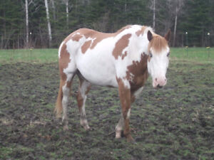 Looking for info on my mare