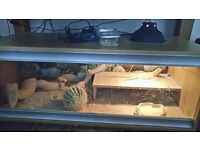 lizard plus vivarium