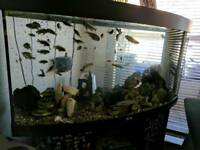 Curved aquarium fully set up