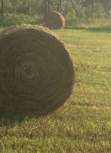Organic Round Hay bales for sale