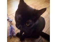 Lovable 8 Month Old Cat Needs a New Home