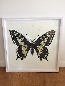 """Illustration, Art, Framed Butterfly Picture 34"""" X 34"""""""