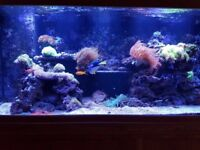 Marine Fish and Tank Setup 5 foot