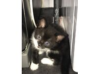 1 kitten left out of a litter of 3