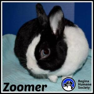 "Young Male Rabbit - Bunny Rabbit: ""Zoomer"""