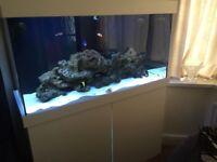 Large Marine Aquarium