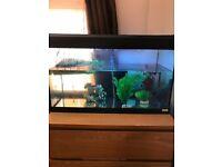 Aquarium with Set Up