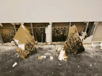 Mold Removal Toronto, Toxic Mold & Asbestos Inspection!