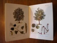 Five 'Shown to the Children' books: Trees, The Sea-shore, The Earth, Nests and Eggs, and Gardens
