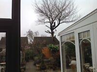 Tree surgeon, chainsaw sculptor, gardening, garden machinery service and repair, fencing,