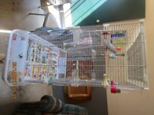 2 Buggies and Deluxe Cage