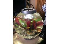 Biorb bundle fish tank