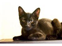 2 kitten for sale