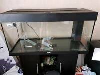Tropical fish tank setup