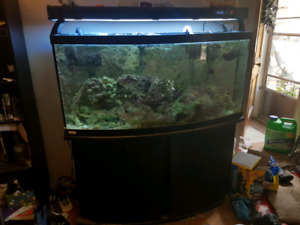 72 gallon bowfront tank plus subtank with everything included!!!