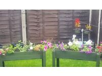 *REDUCED* PAIR OF HANDMADE PLANTERS & FLOWERS £30 FOR PAIR NO SHOW FOR 3RD TIME