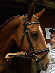 On-property part-lease of 16.2 eventer/jumper