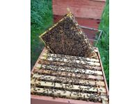 FOR SALE 3 LEFT BEEHIVES AND BEES MUST PICK UP IN NOEFOLK