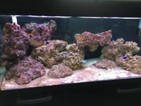 Marine Fish Tank and Accessories