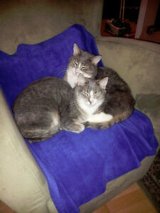 2 adult male cats need a loving home