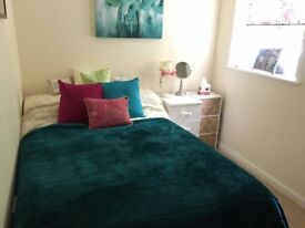 Room to let in lovely garden flat, central Chelmsford close to station & town - must love cats!