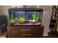 Fluval Roma 200l 3ft fish tank