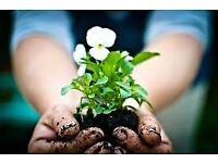 Gardening, Cleaning and Laundry Service £12 per hour