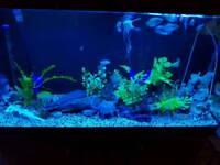 Aquarium 4ft with cabinet & fx6 filter & extras