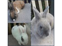 3 female rabbits for rehoming