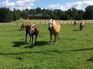 Looking For Horses/Ponies in Brussels Area