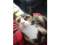 MISSING 2 CATS RHOS PONTARDAWE