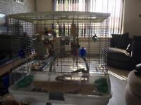 Medium Vision bird cage