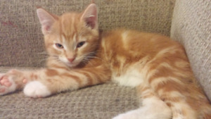 Cats and kitten to give away
