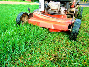 Exceptional Quality Lawn Cutting