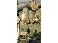 Firewood Tree - COLLECTION or DELIVERY