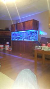 aquarium 135 gallon