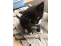 Little cute kittens ready to find new home