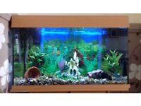Jewel 125 aquarium, cabinet, accessories and fish