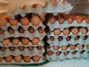 Fresh Farm Eggs For Sale