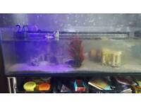 Fish tank, set up and fish for sale
