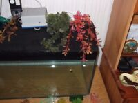3ft Clearseal fish tank