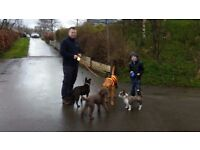 Dog Walking / Puppy Visiting Service. We cover the Gateshead area