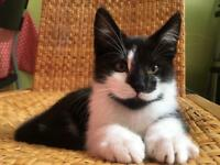 🐱CUTE KITTENS -- 10 weeks old --🐱