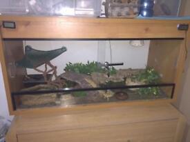 Leopard geckos in full set up